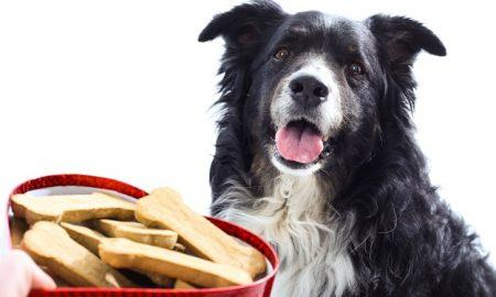 DIY Food for Dogs Archives - The Dogington Post