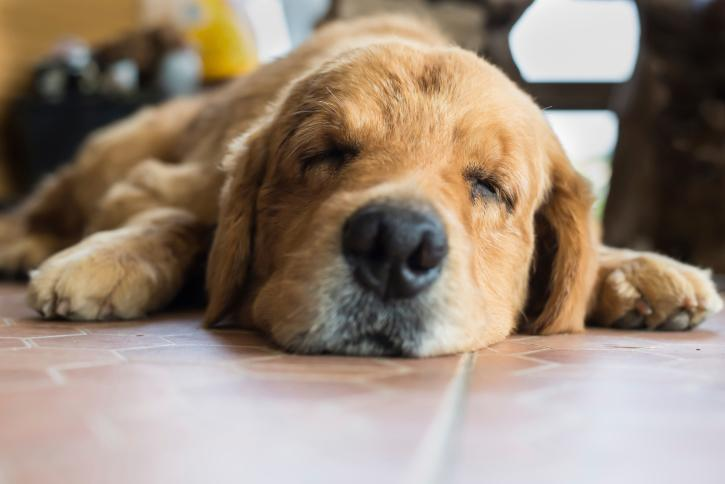 Is My Dog Having A Seizure? - The Dogington Post