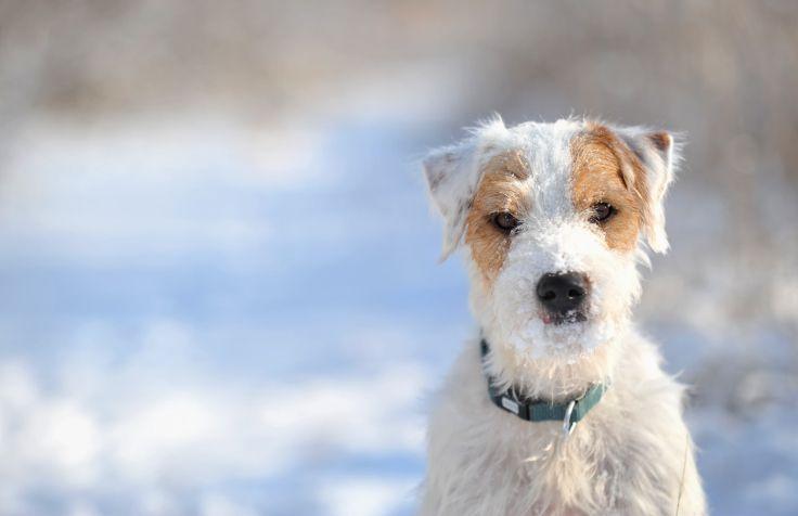 winterdog2
