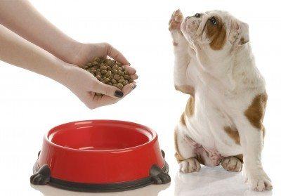 dogfoodallergy