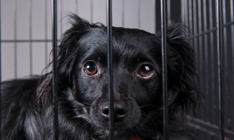 blackdogshelter
