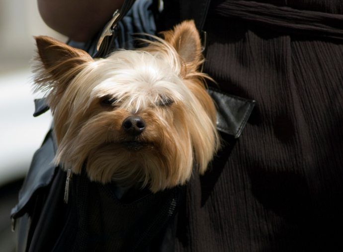Common Purse Amp Pocket Items That Can Poison Your Dog The