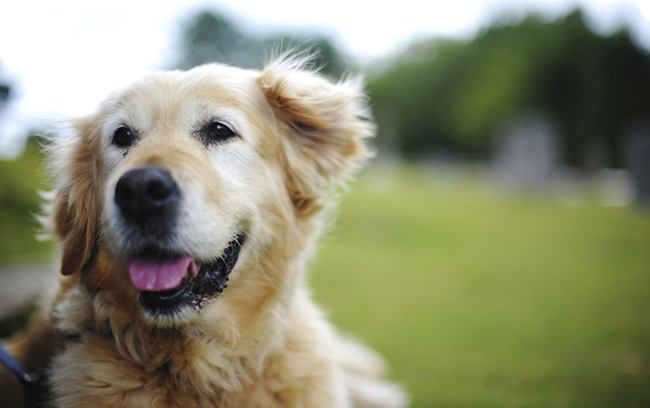 Ten Early Warning Signs of Canine Cancer - The Dogington Post