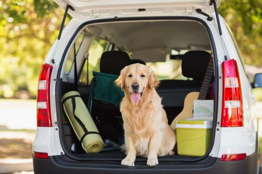 usa cheap sale detailed pictures hot sale online Ruff Riders: The 7 Best Cars for Dogs and Their Owners - The ...