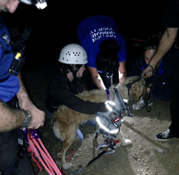 After an 8-hour rescue effort by the Oregon Human Society, Gracie was hoisted to safety. (Image via Oregon Humane Society)