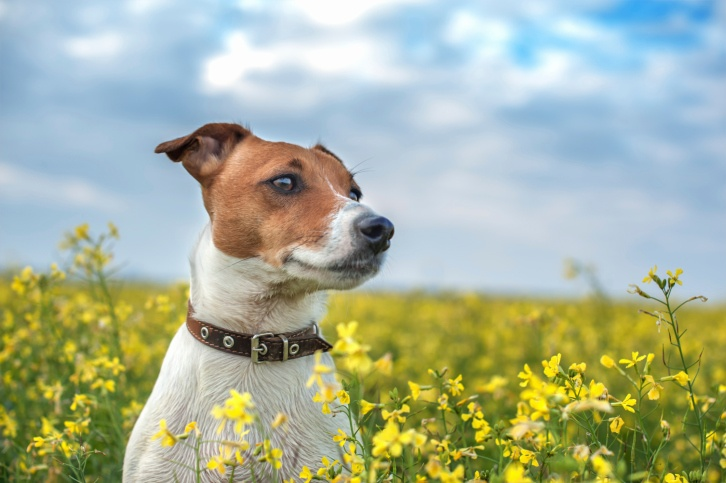De-Worming Your Dog Naturally - The Dogington Post