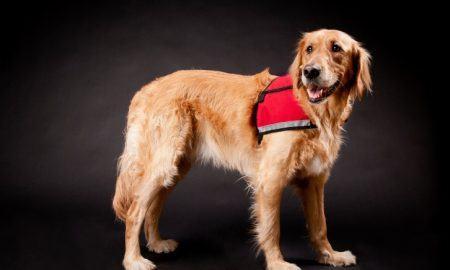 national service dog registry Archives - The Dogington Post
