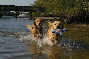 Our editor's furkids, Olive and Noah LOVE playing at the beach with their Larry the Mailman PrideBites toy!
