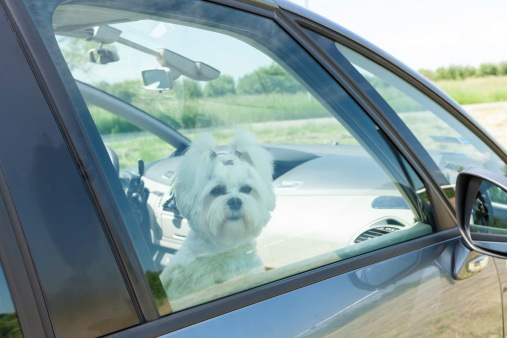 Protecting Dogs in Hot Cars: What is YOUR State's Law? - The