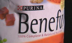 Beneful Dog Food Recall Symptoms