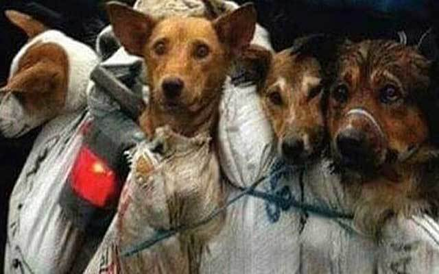 StopYuLin2015: 10,000 Dogs Tortured as Part of Annual Yulin Dog