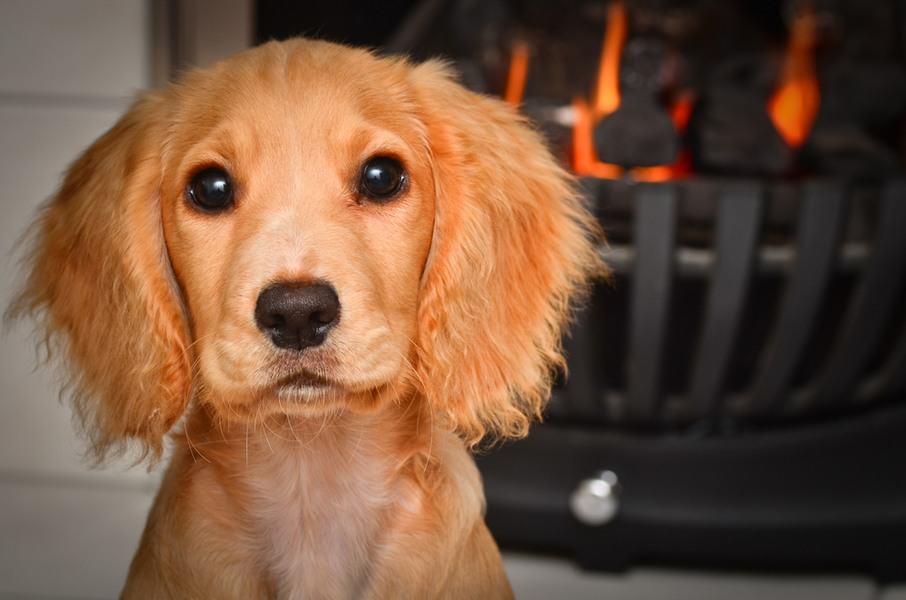dogfiresafety