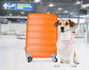 Airport Dog Pet