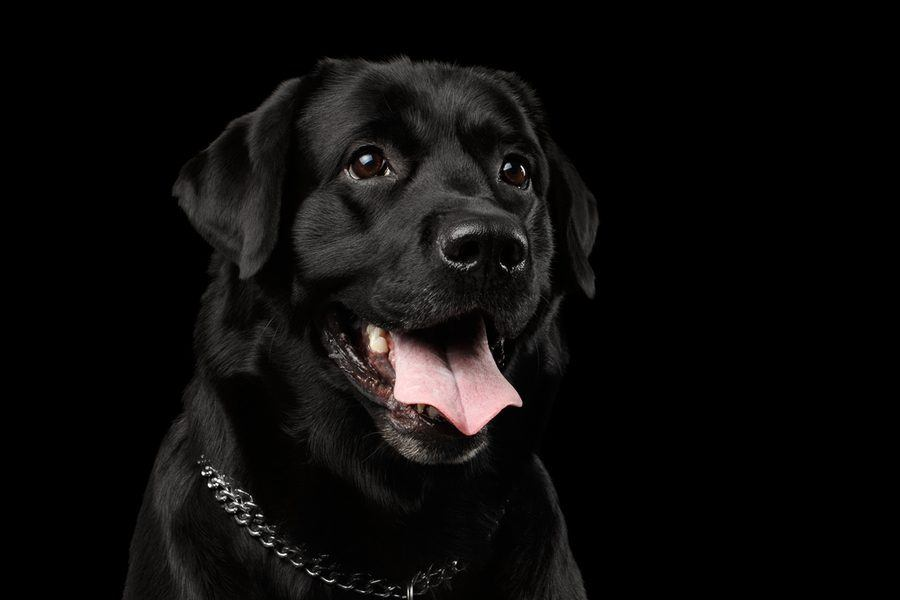Don T Judge A Dog By Its Color It S Black Dog Syndrome Awareness Month The Dogington Post