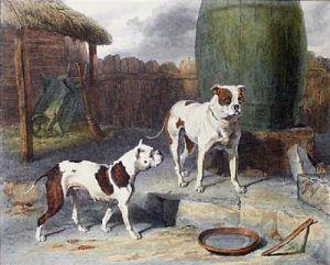 OldEnglishBulldog1