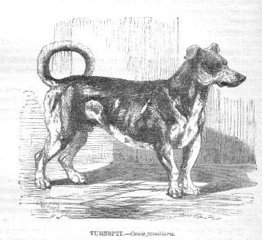 Turnspitdog-18621