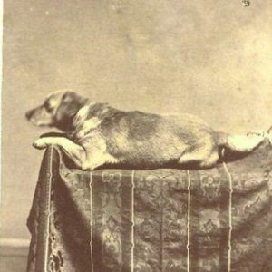 Abraham Lincoln's beloved and faithful friend, Fido.
