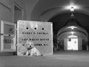 Feller, a 5-week old Cocker Spaniel puppy was delivered to President Truman in a giant silver crate.