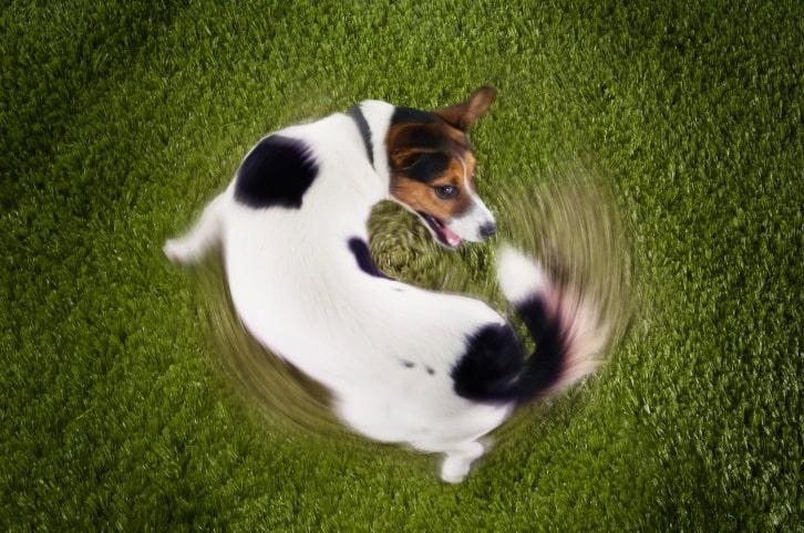 chasingtail