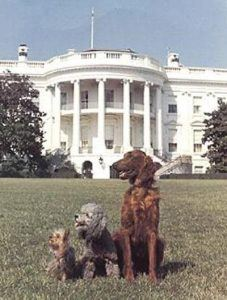 President Nixon's dogs on the White House lawn.