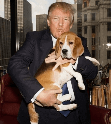 Trump frequently poses with the Westminster Kennel Club Best in Show winners each year. Here he is with Miss P, the 2015 winner.