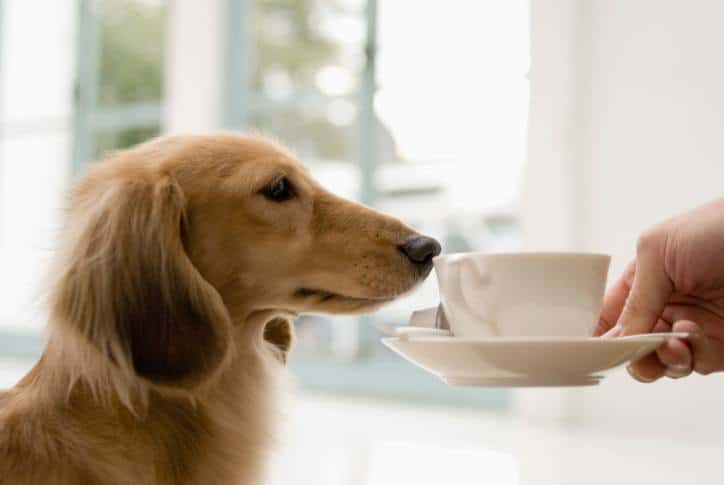 Introducing Starbarks – The Café For Dogs - The Dogington Post
