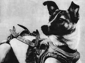 In 1957, Laika became the first animal launched into orbit, paving the way for human spaceflight.