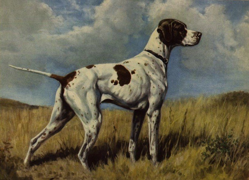 The Braque du Puy is now extinct.