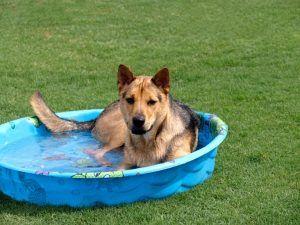 summerdog2