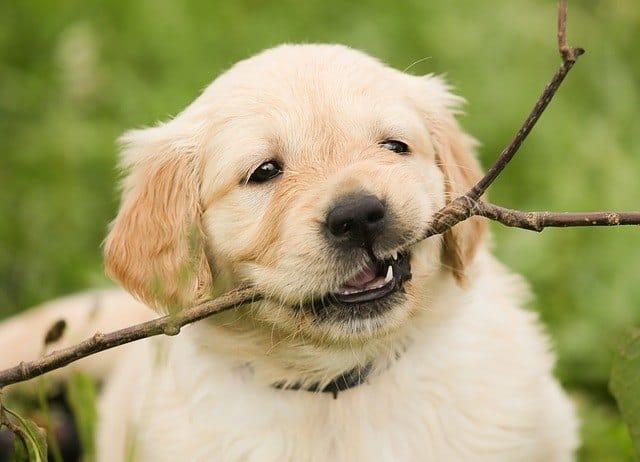 puppystick
