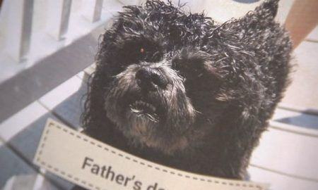 Shaggy Dog Puppies And Supplies Archives The Dogington Post