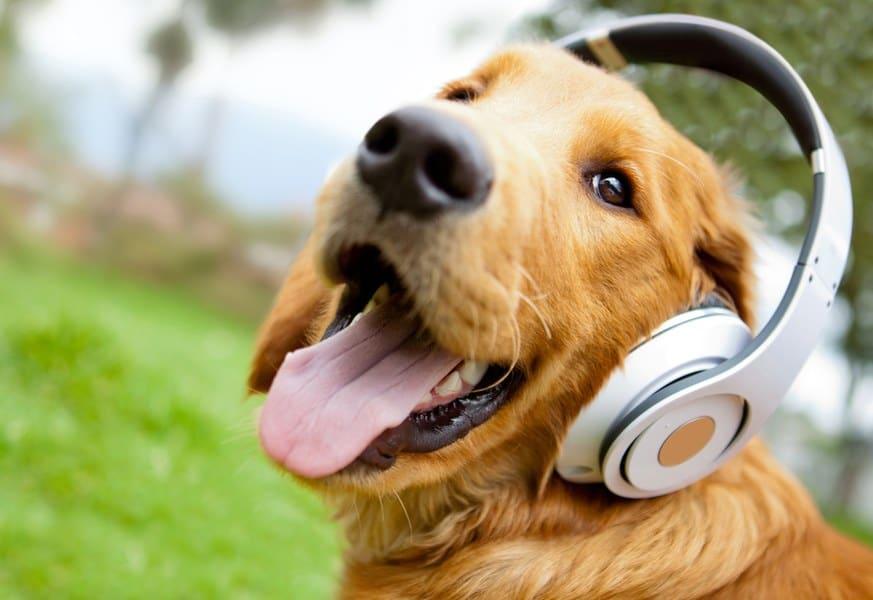 musicfordogs