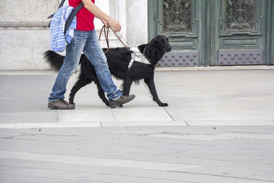 realservicedog