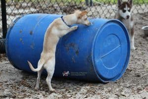 puppyplaying_barrel