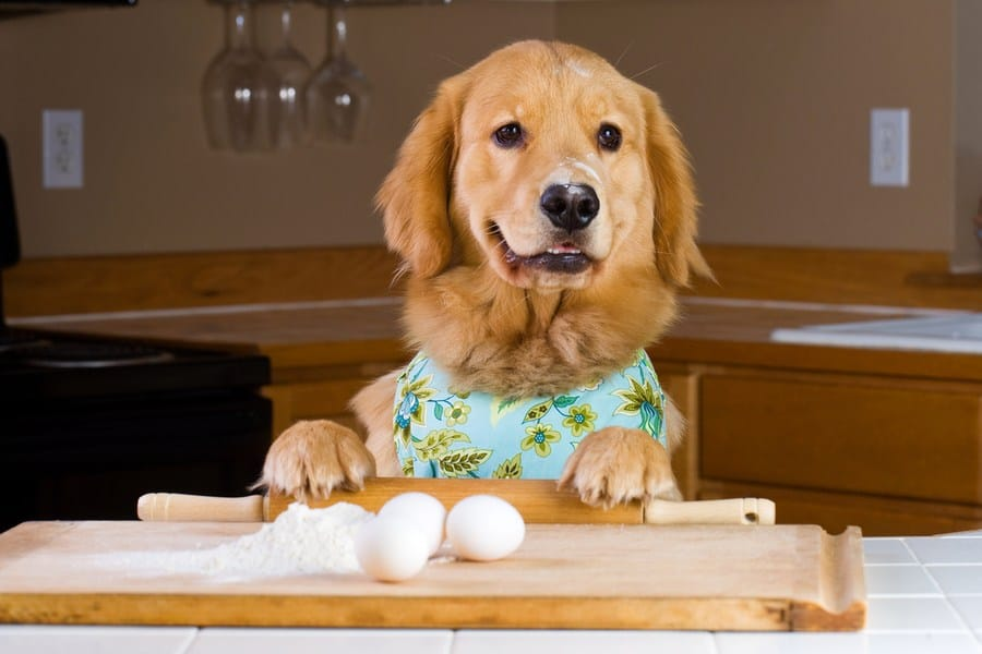 cookingwithdog