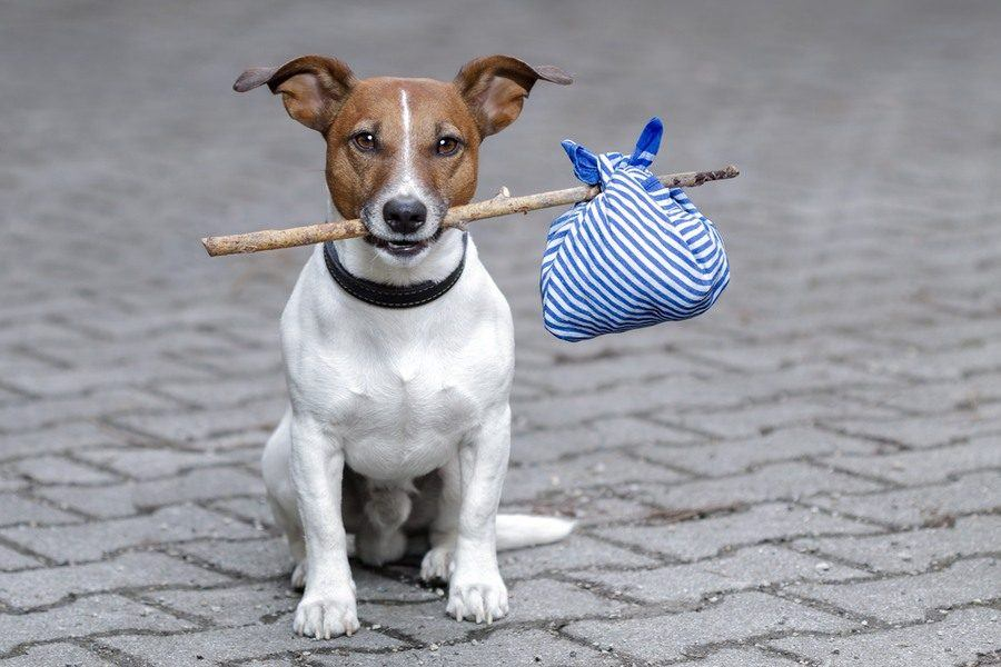 The Scary Truth About Free To A Good Home Dog Classifieds The Dogington Post