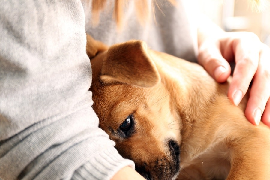 How Sharing Your Life With a Dog Can Reduce Stress & Improve Your Life -  The Dogington Post