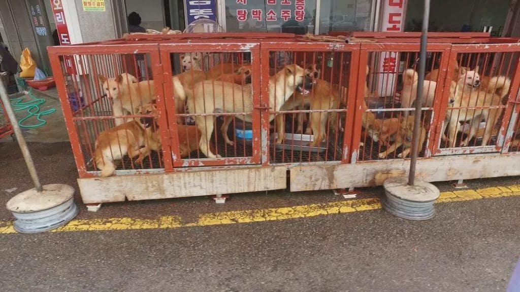 Moran Market 2016. Source: In Defense of Animals