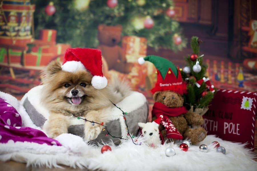 christmasdogbed