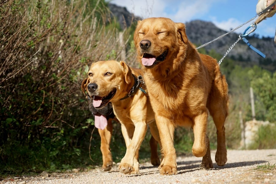 Six Benefits of Fostering a Dog in Need - The Dogington Post