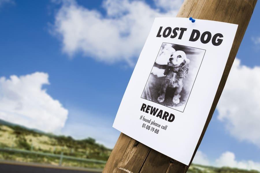 lostdog2