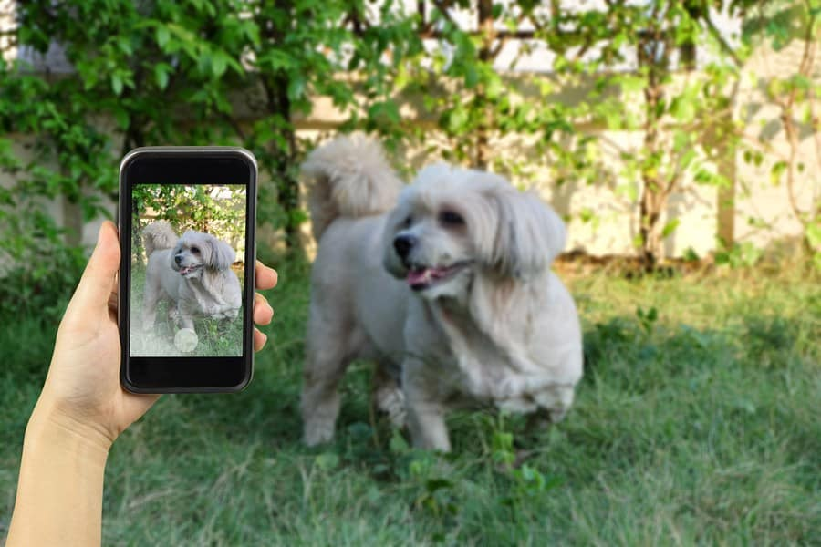 photoofdog