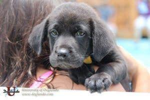 puppy-on-shoulder