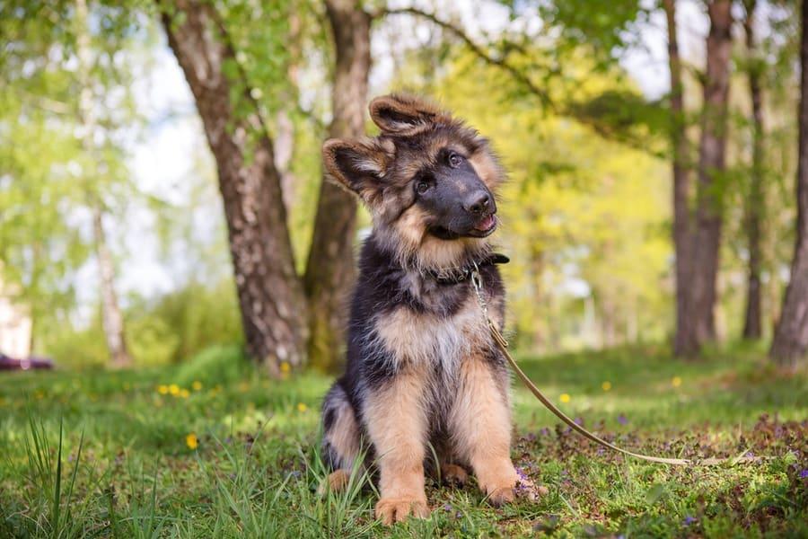 puppytraining2