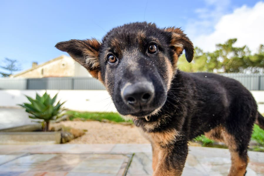 puppytraining3