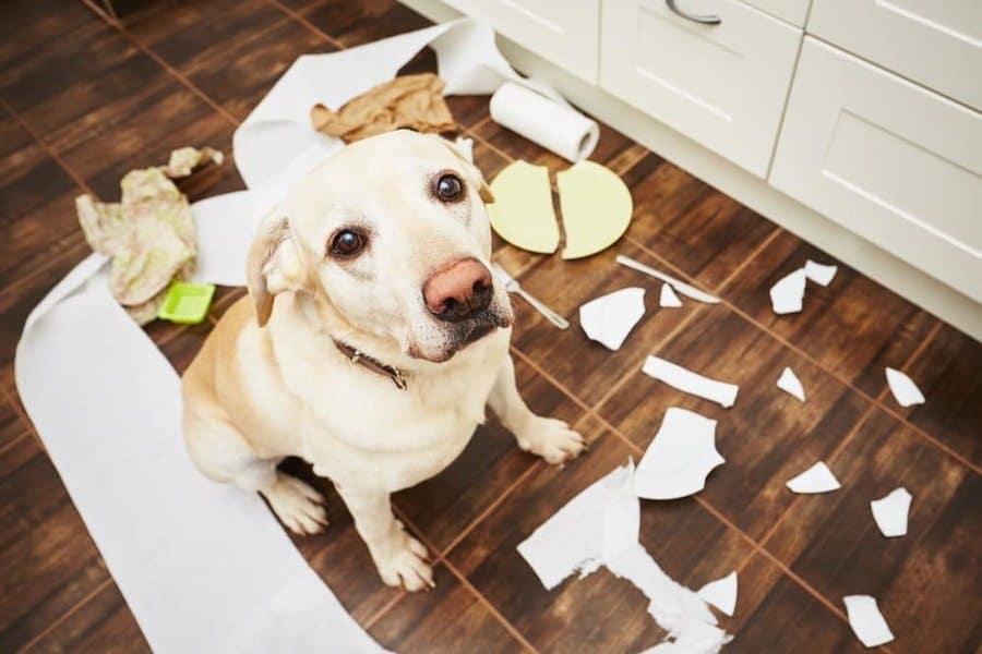 Ask the Trainer: Provide Mental Stimulation to Prevent Destructive Behaviors - The Dogington Post
