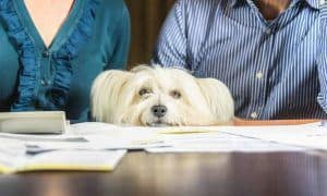 Need Help With Vet Bills or Pet Food? There ARE Resources