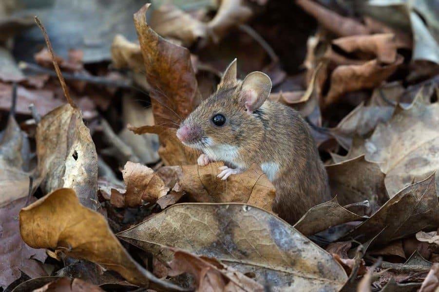 mouse-min