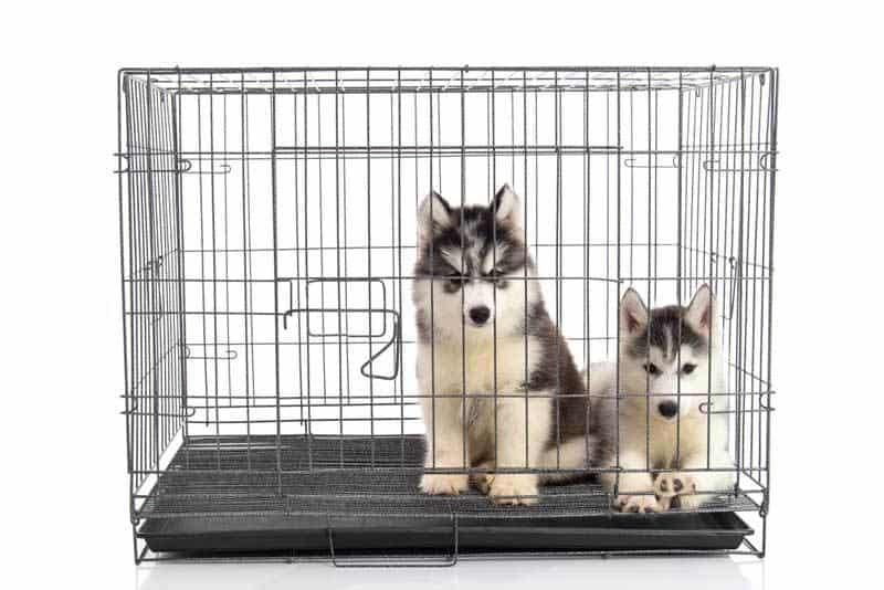 puppycrate_opt