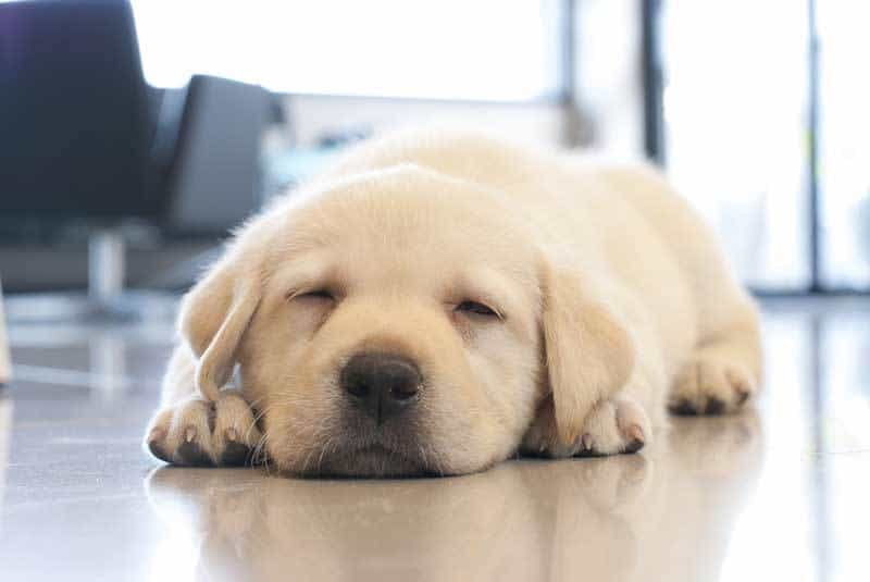 Understanding Why Your Puppy Cries and What You Can Do to Stop It - The  Dogington Post